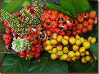 Guarana - tabletki NRG
